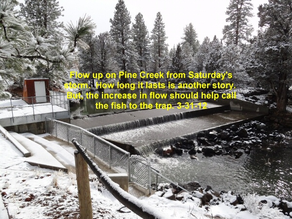 Flow up on Pine Creek 3-31-12