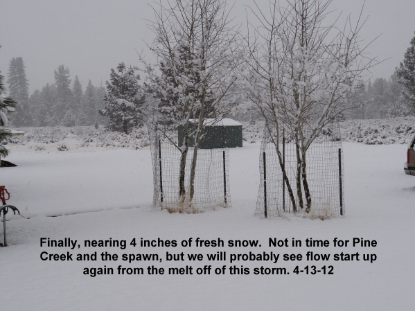 Fresh snow will make Pine Creek flow briefly as it melts 4-13-12
