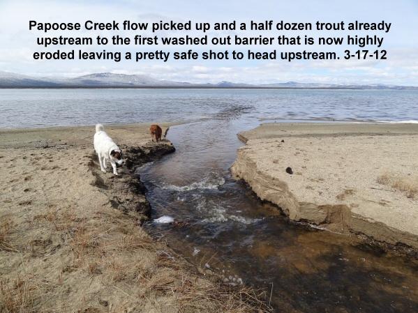 Papoose Creek picks up flow 3-17-12