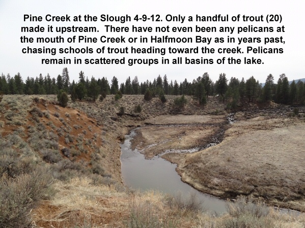 Pine Creek at the Slough 4-9-12