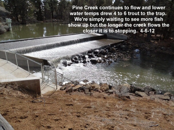 Pine Creek continues 4-6-12