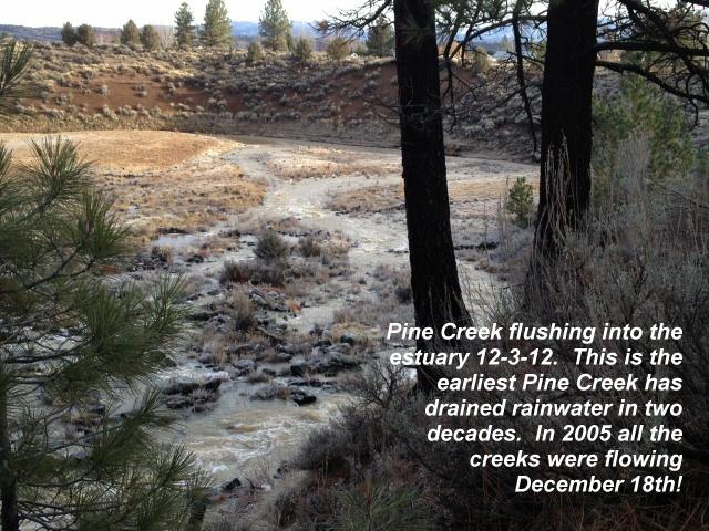 Pine Creek flushing to the estuary 12-3-12