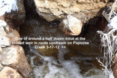 Fish in Papoose Creek on 3-17-12