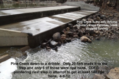 Flow down in Pine Creek _amp_ only 6 ripe hens in the trap 4-9-12