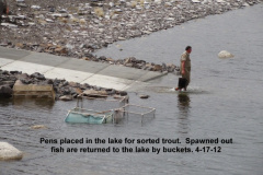 Pens placed in the lake for the captured and sorted trout 4-17-12