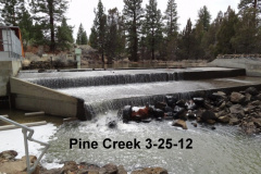 Pine Creek at the egg collection facility 3-25-12