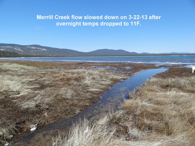 Merrill Creek flow slowed but will pick back up when temps rise again 3-22-13