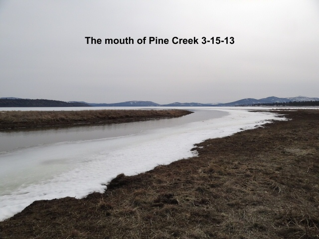 The mouth of Pine Creek 3-15-13