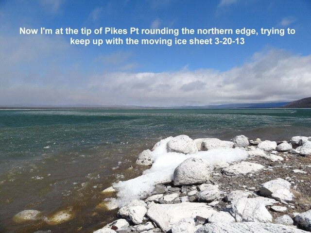 Trying to keep up with the drifting ice floe 3-20-13