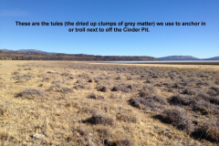 The tules off the Cinder Pit 1-26-14
