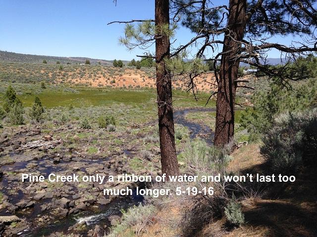 Pine Creek 5-19-16