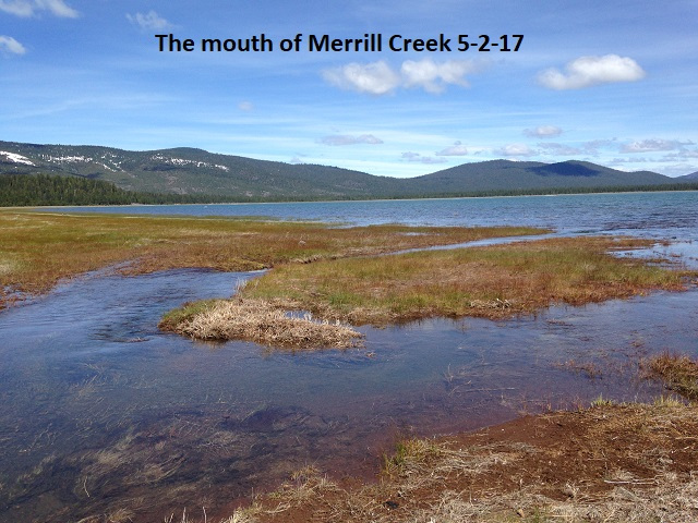 The mouth of Merrill Creek 5-2-17