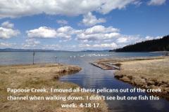 Papoose Creek 4-18-17