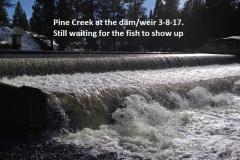 Pine Creek 3-8-17