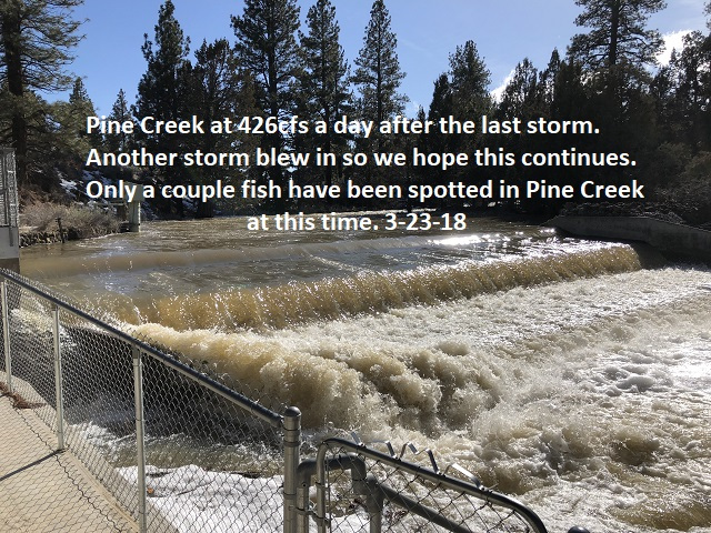 3-23-18 Pine Creek at 426cfs a day after the last storm