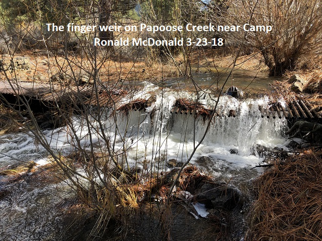 3-23-18 The finger weir on Papoose Creek