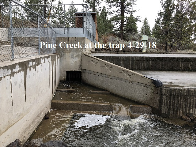 4-29-18 Pine Creek at the trap