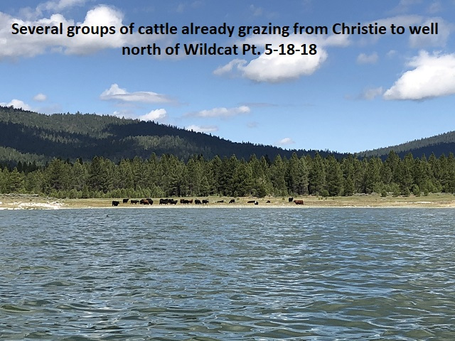 5-18-18- grazing along the west side of Eagle Lake already in progress