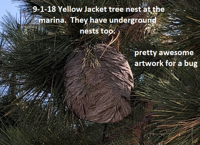 9-1-18 yellow jacket tree nest