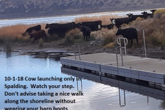 10-1-18 Cow launching only Spalding Marina