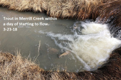 3-23-18 Trout in Merrill Creek within a day of starting to flow