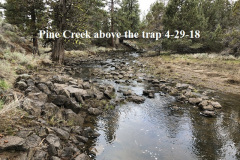 4-29-18 Pine Creek above the trap