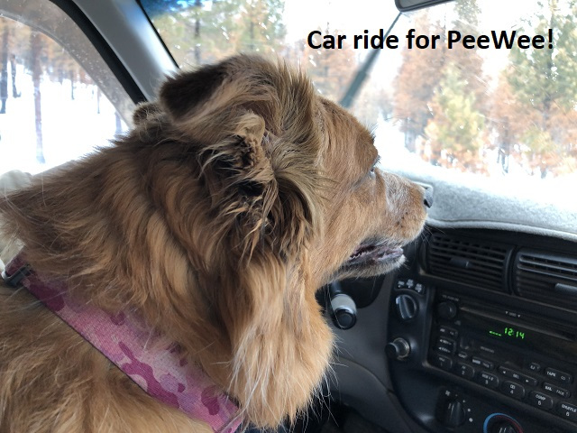 2-14-19 Car ride for PeeWee