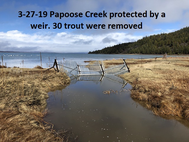 3-27-19-Papoose-Creek-protected-by-a-weir