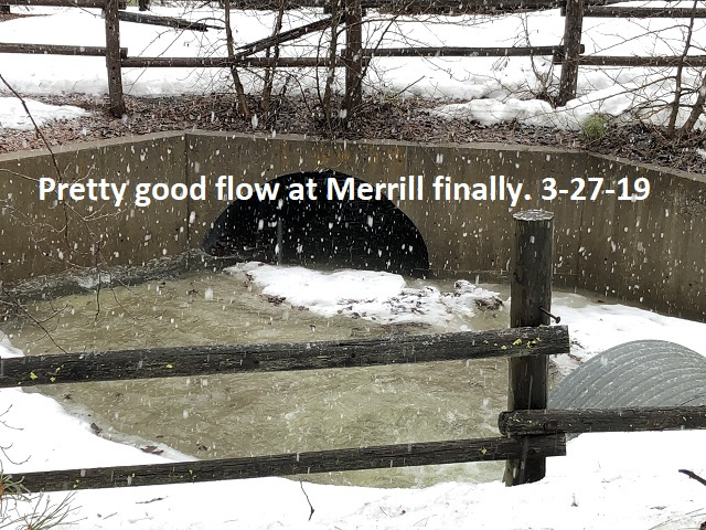 3-27-19-Pretty-good-flow-at-Merrill-Creek-now