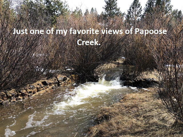 3-27-19-just-one-of-my-favorite-views-of-Papoose-Creek