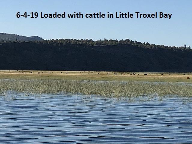 6-4-19-Loaded-with-cattle-in-LIttle-Troxel-Bay