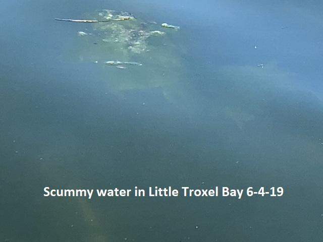 6-4-19-Scummy-water-in-Little-Troxel-Bay