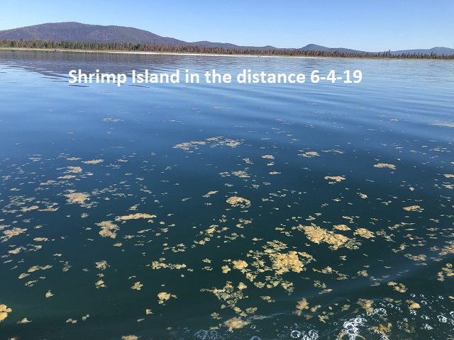 6-4-19-Shrimp-Island-south-basin