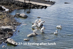 3-27-19-Resting-after-lunch