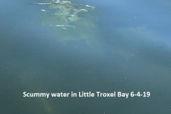 6-4-19-Scummy-water-in-Little-Troxel-Bay