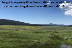 6-5-19-Pine-Creek-Valley