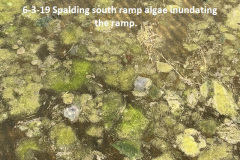 6-3-19-Spalding-south-ramp-algae