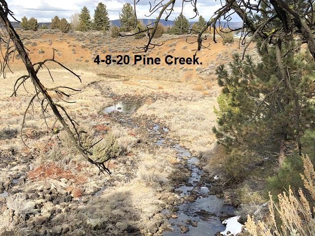 4-8-20-Pine-Creek-^