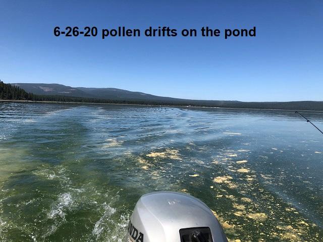 6-26-20-pollen-drifts