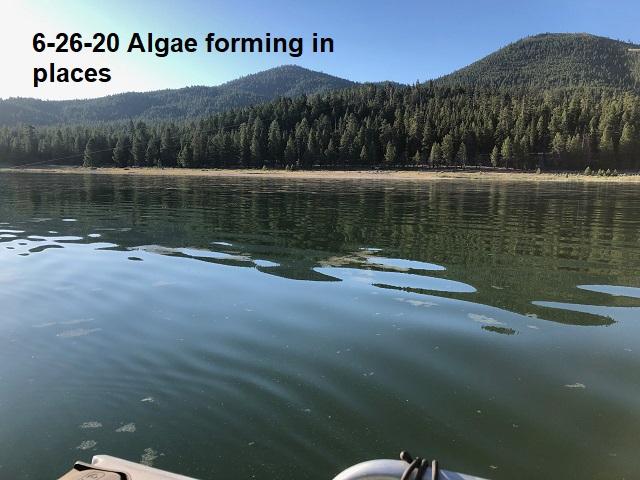 6-26-20-some-algae-forming