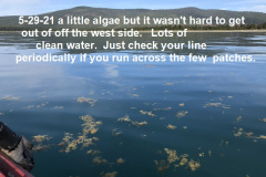 5-29-21-A-little-algae-here-and-there-west-side-mostly
